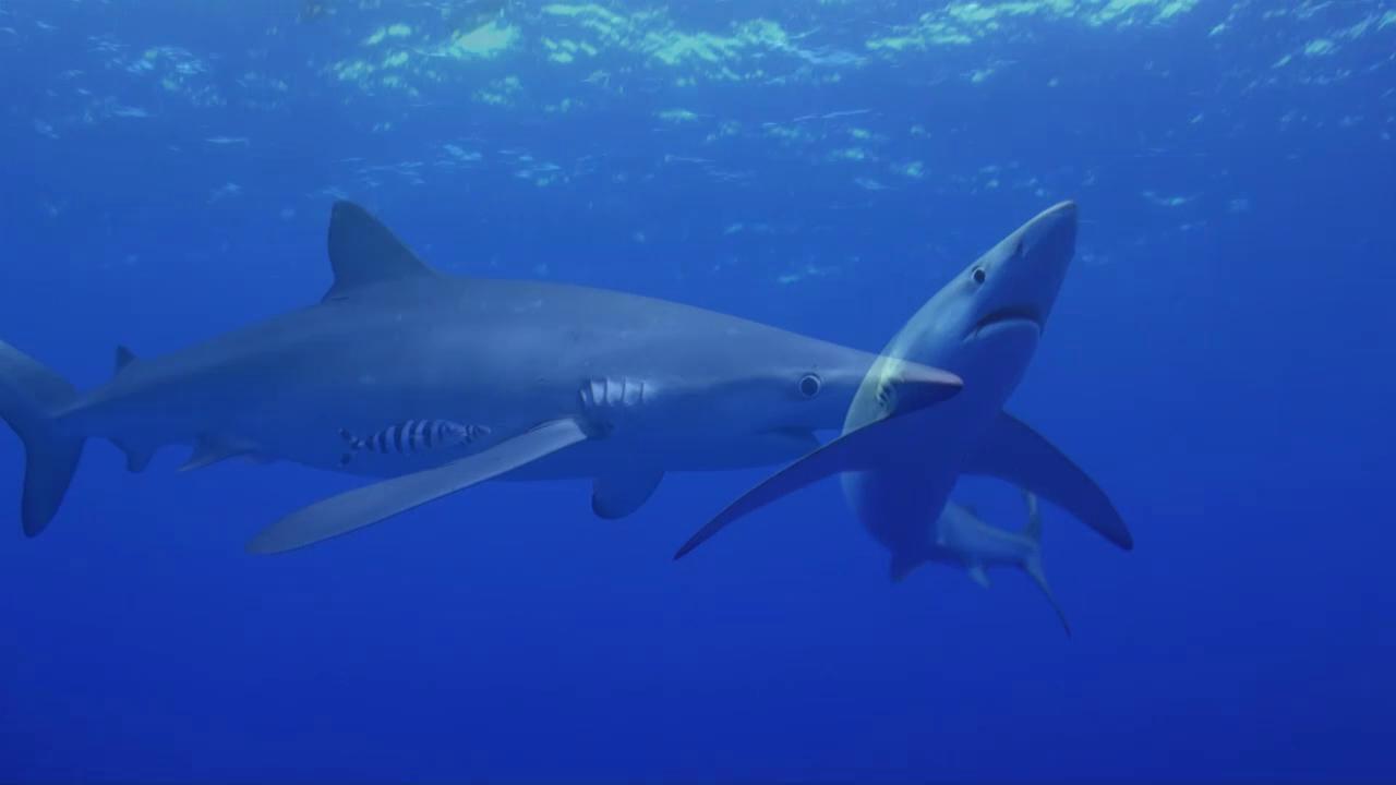 The Azores Underwater