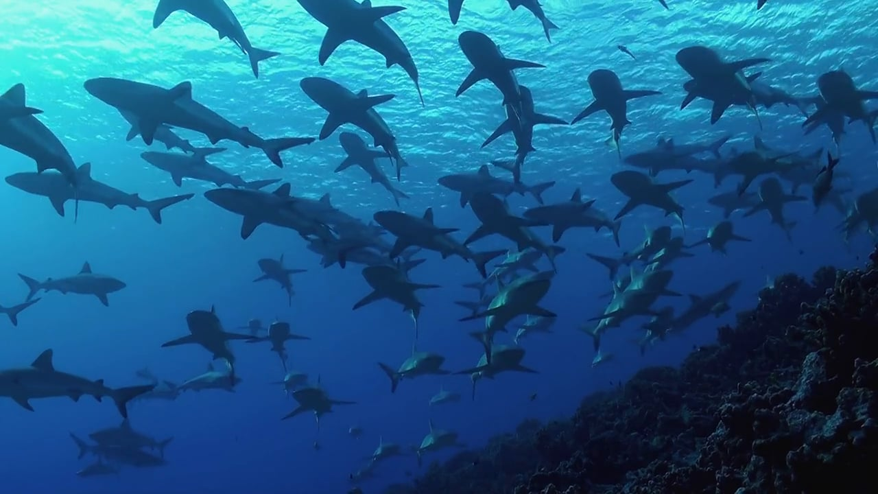The Wall of Sharks