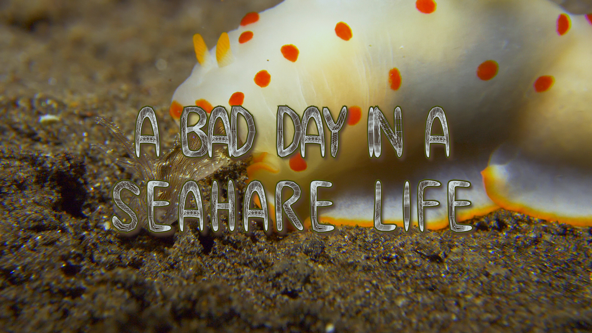 A day in a Sea hare life