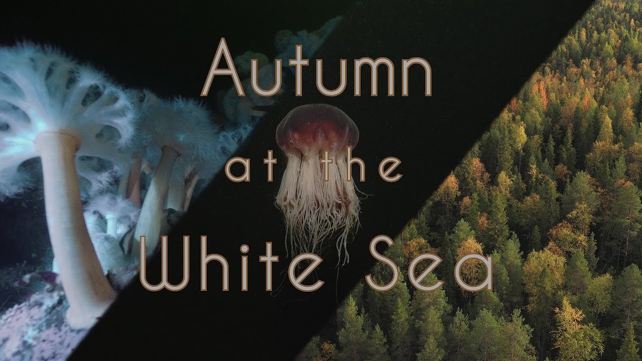Autumn at the White Sea